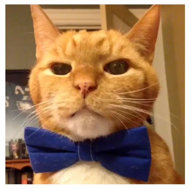 "Floppit the adorable orange cat lip synchs to R. Kelly's ""I'm A Flirt."""