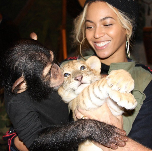 Check out this photo of Beyonce snuggling a chimp and a lion cub at Blue Ivy's 2nd birthday party in Miami!